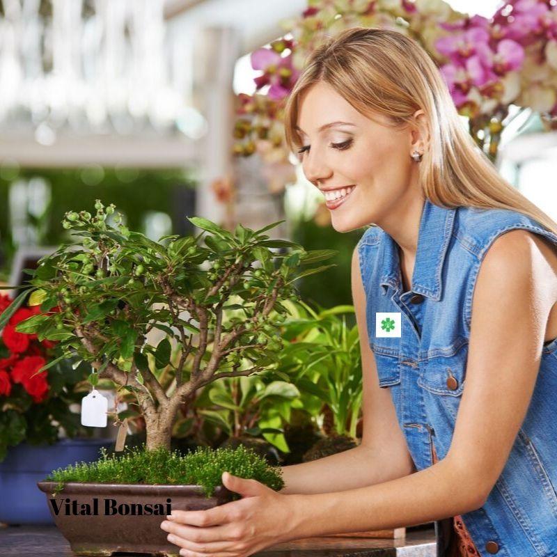 acheter 1er bonsai
