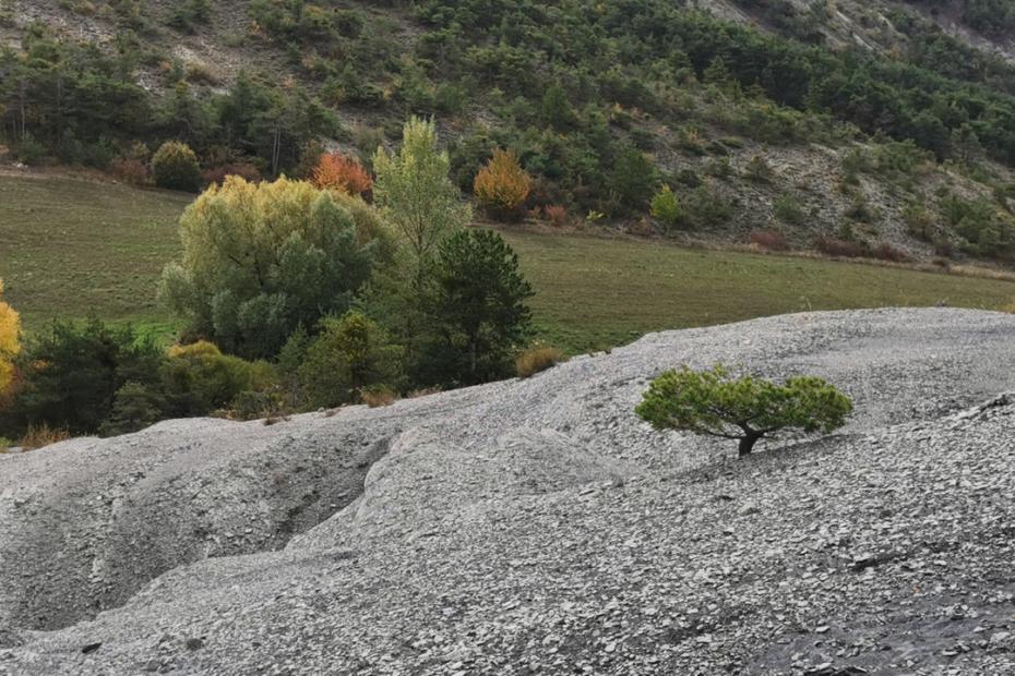 yamadori terrain difficile