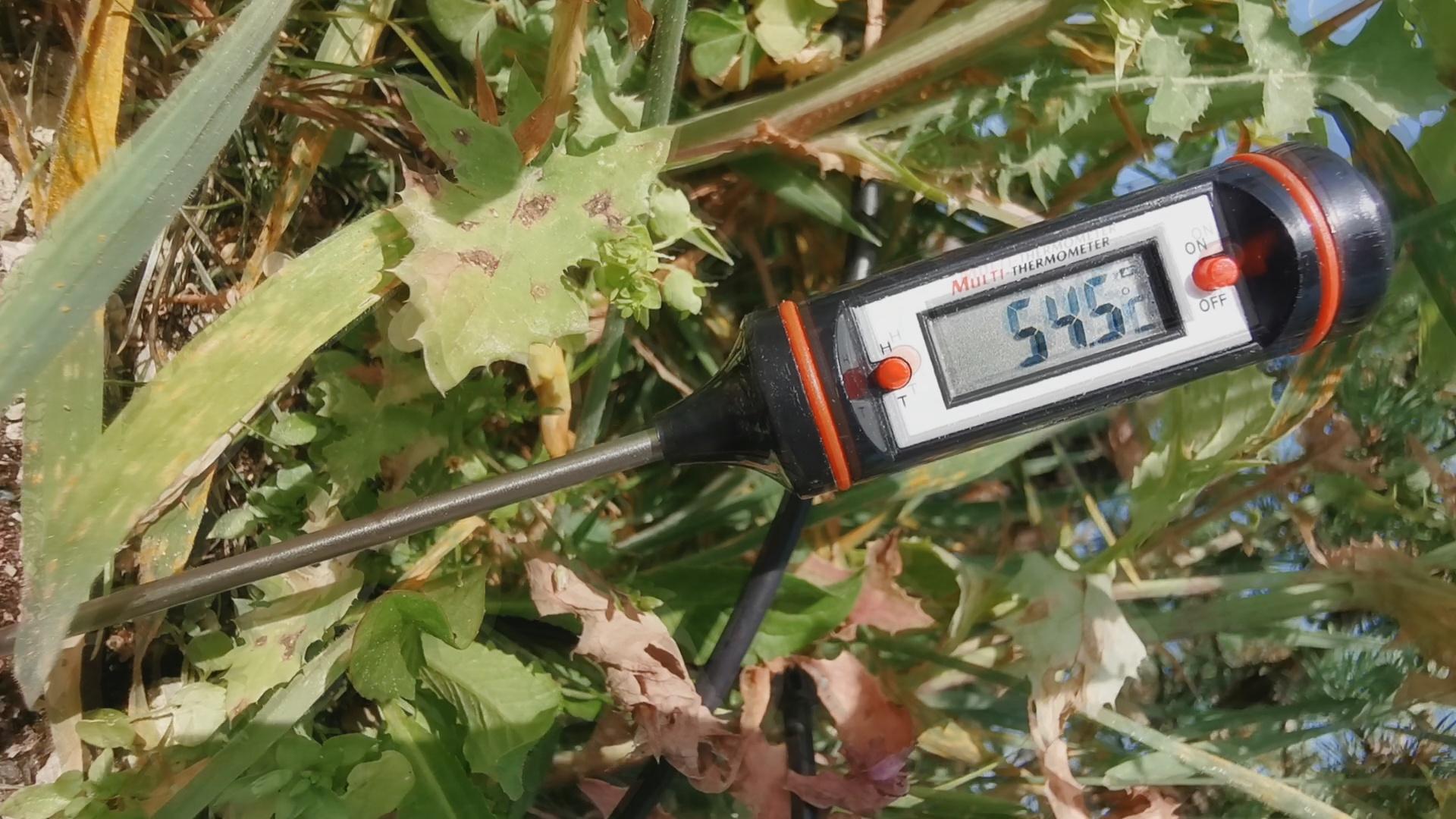 température bonsai