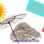 Protéger nos bonsaï du soleil
