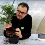 comment débuter le bonsai