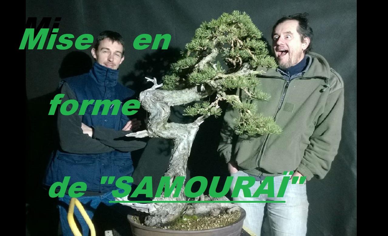Mise en forme d'un pin avec Olivier Barreau.