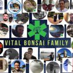 VITAL BONSAI FAMILY