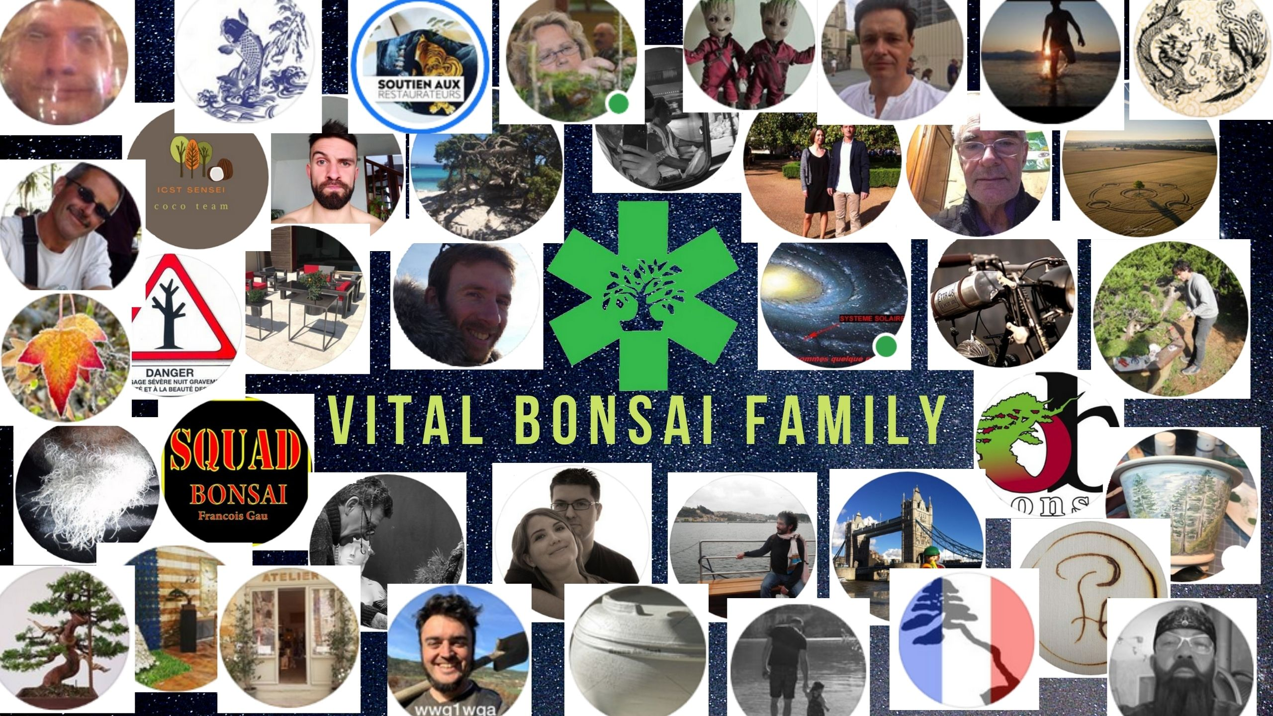 VITAL BONSAI FAMILY