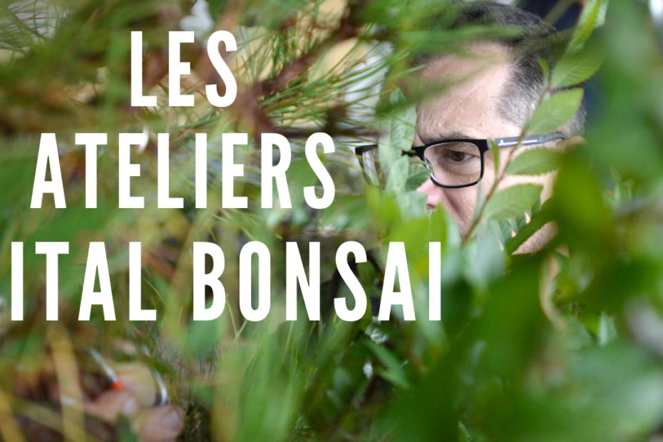 atelier vital bonsai
